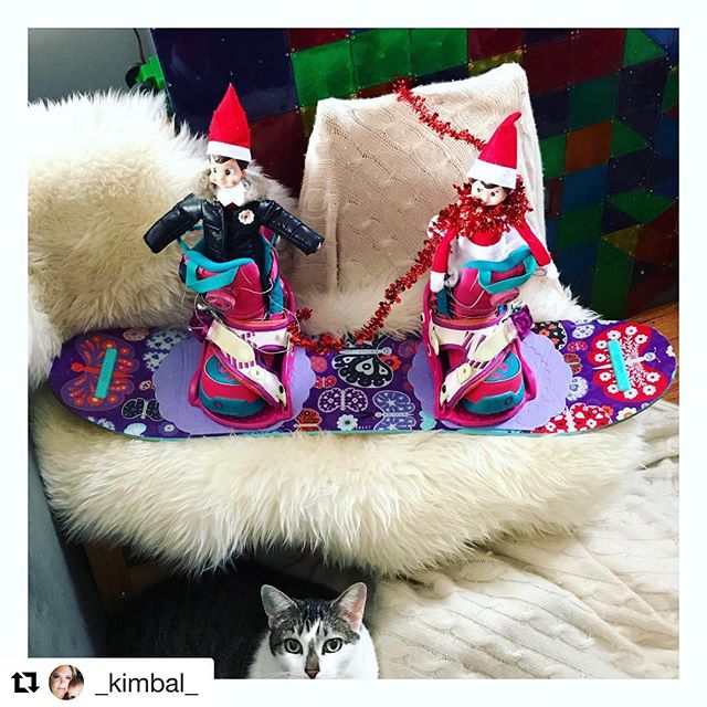 P U N K Y & C O C O day too many to go ... @peudle did good with a Sophie photobomb @burtonsnowboards @cats_of_instagram @elfontheshelf @elfontheshelfadventures . .#elfontheshelf #christmas #snow #snowboarding