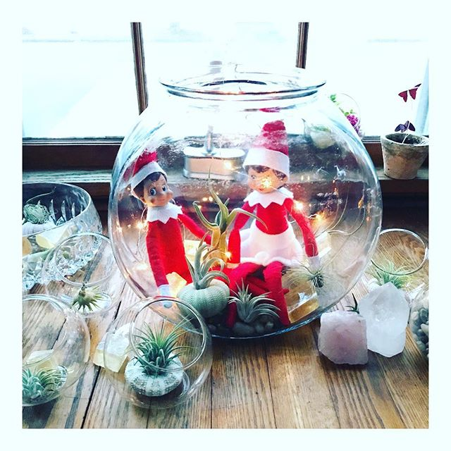 PUNKY + COCO got into my terrarium workshop. . . . @elfontheshelf #elfontheshelf #elf #terrarium #crystals #christmas #tinygala