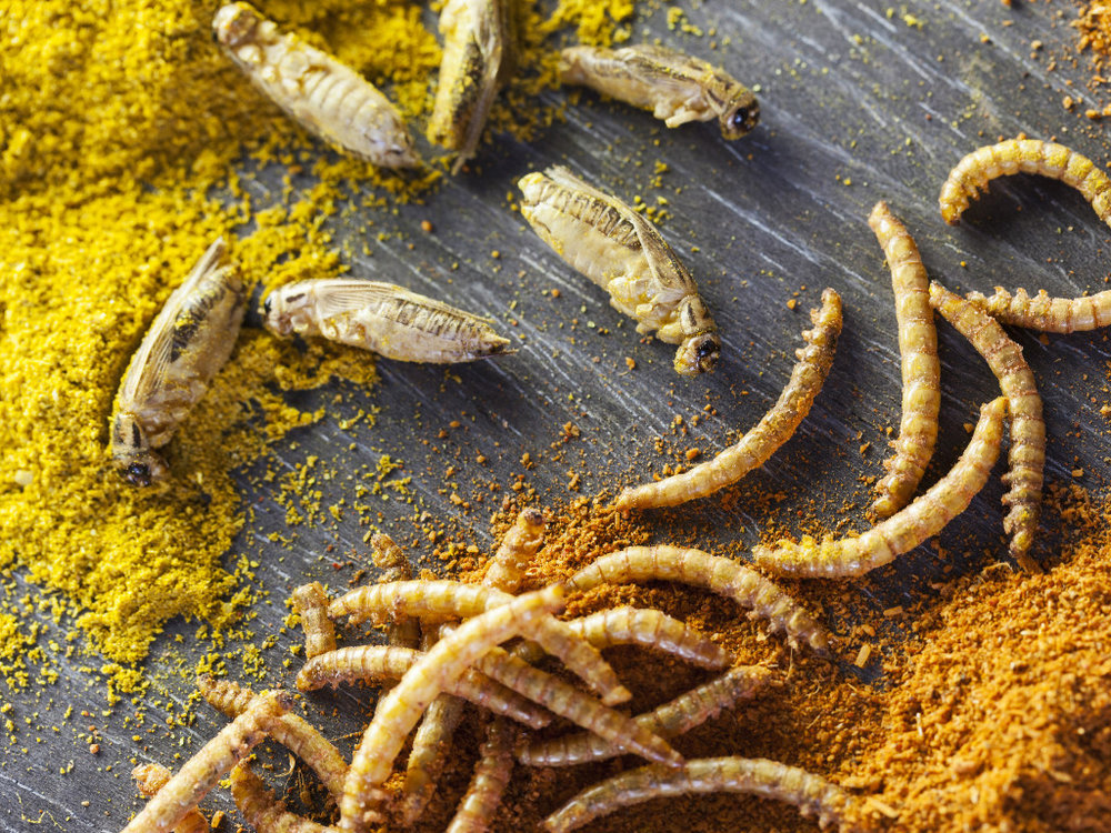 Insect flour