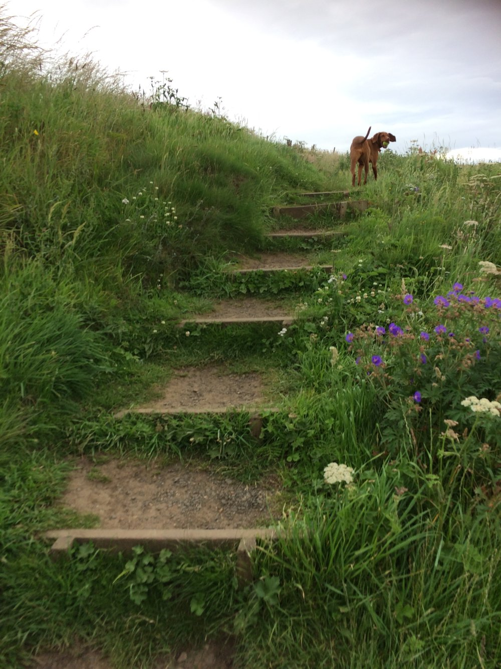 Princess Jasper leading the way along the Fife Coastal Path