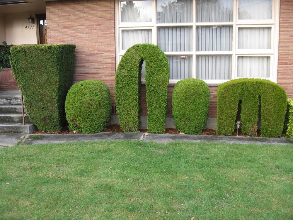 shrubs m10 2010.jpg