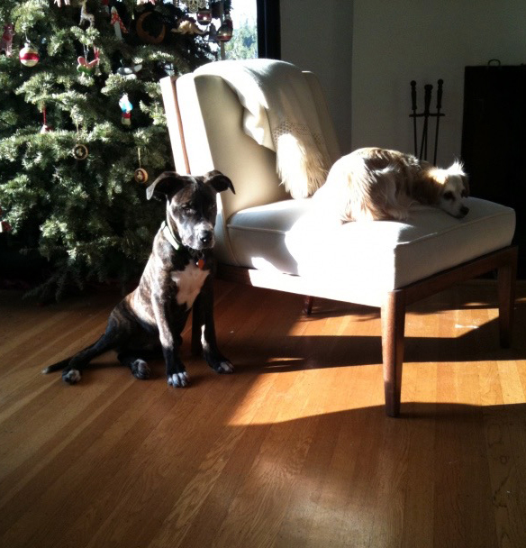 earl puppy, and lily on chair_adj01.jpg