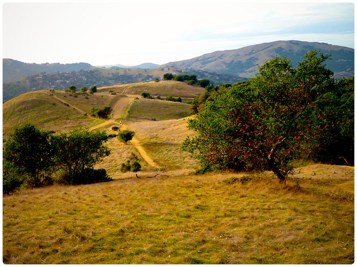 Marin Hills-Hiking Trail-Trees_adj01-sm-02.jpg