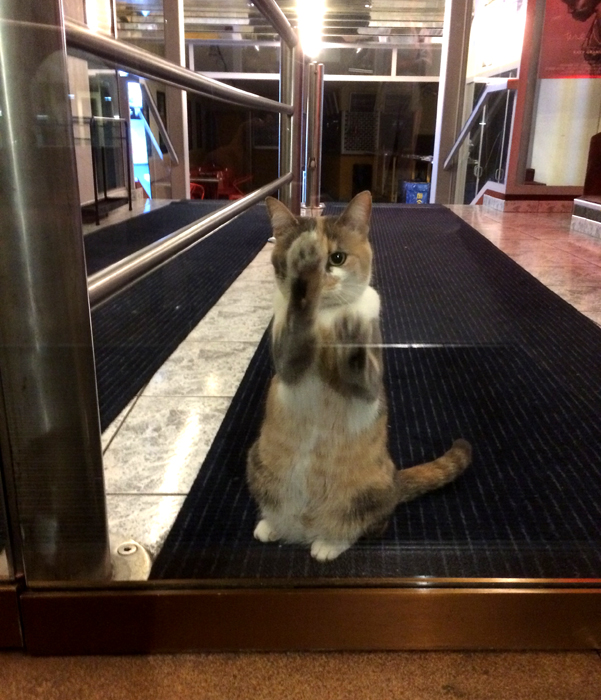 Cat-theater-lobby-nyon_adj01-sm.jpg