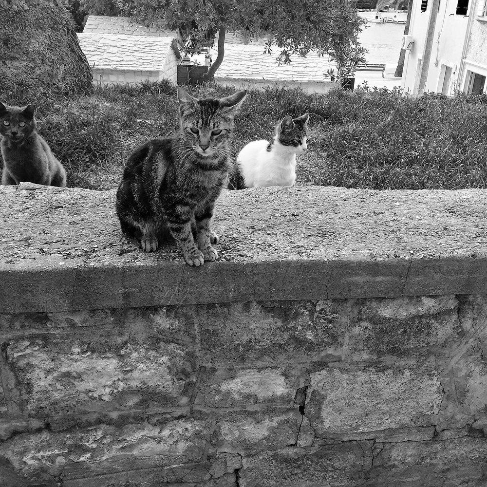 PURRR-3cats.jpg
