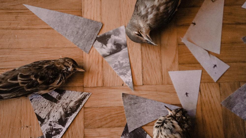 deadtime-process-threebirds.jpg