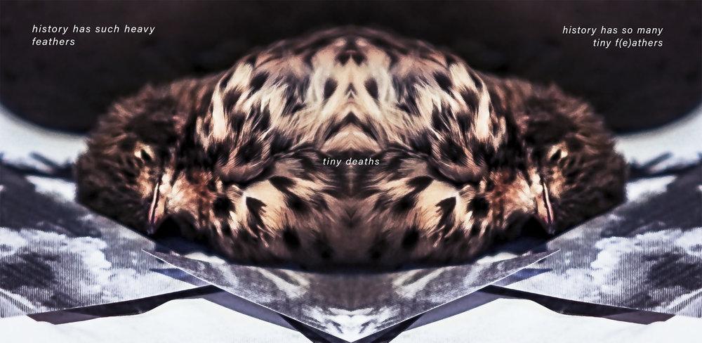 mockup_heavy-f(e)athers_wtext_birdheads copy.jpg