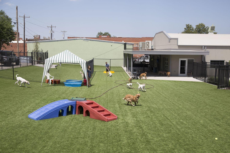 ninth street barking lot an urban dog daycare in downtown