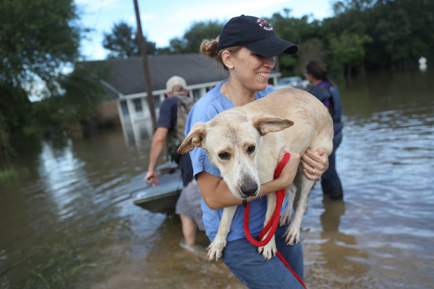 Joe Raedle via Getty Images  Ann Chapman from the Louisiana State Animal Response Team carries a dog she helped rescue from flood waters on August 15.