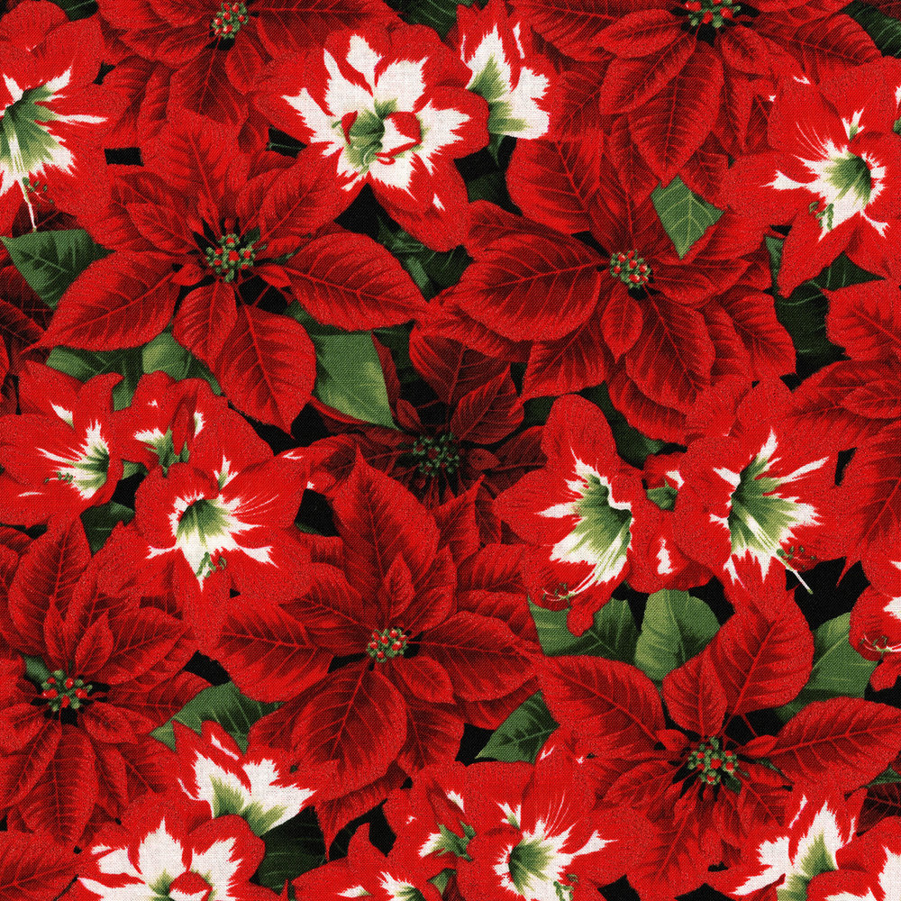 3484-001  AMARYLLIS BEAUTIES-RADIANT PINE
