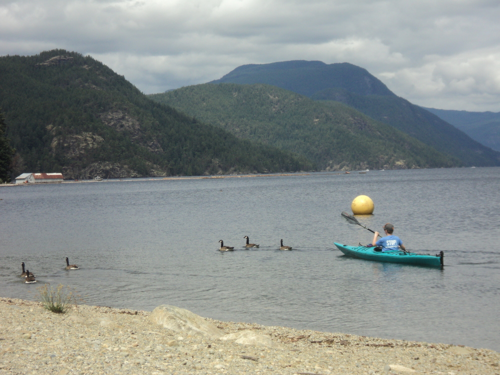 Kayaking in Mowat Bay with Canadian Geese
