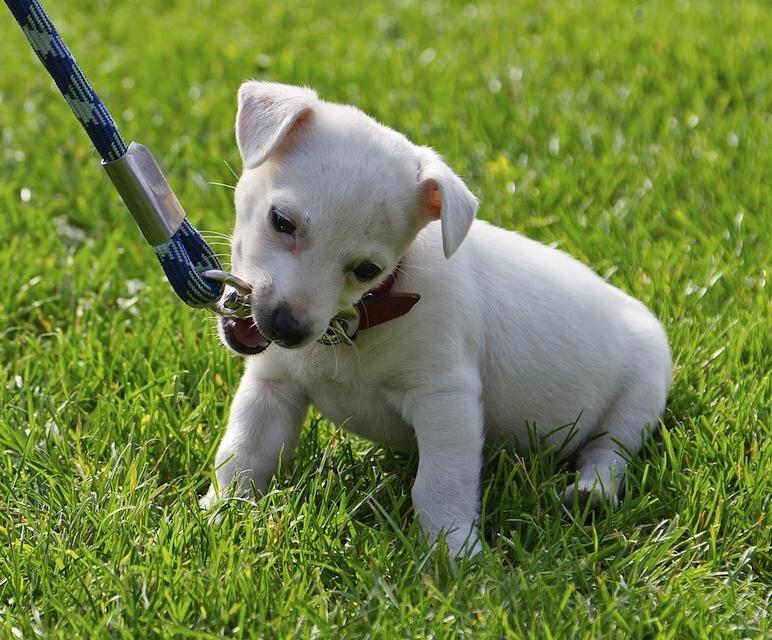 puppy walk.jpg