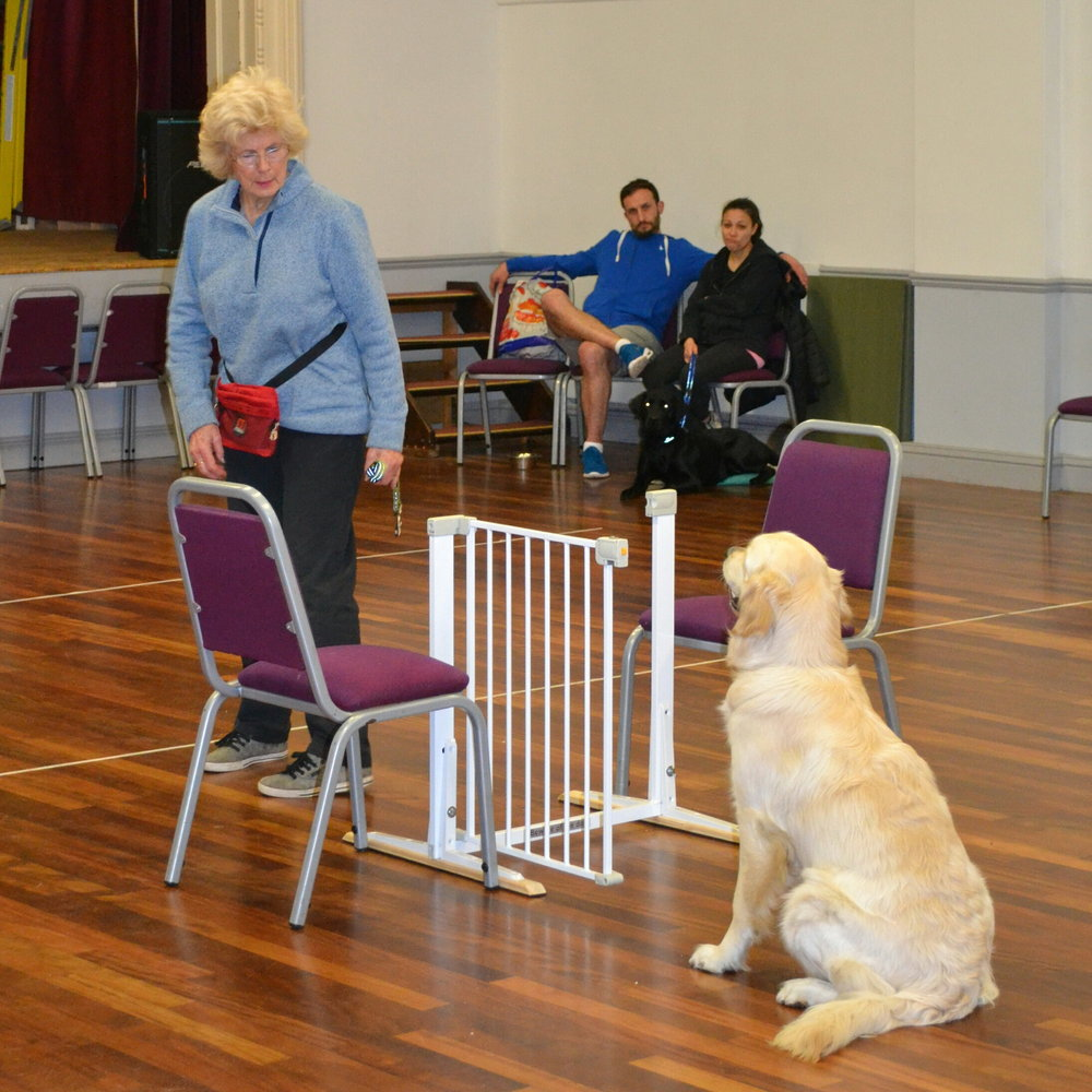 Puppy training in Redhill
