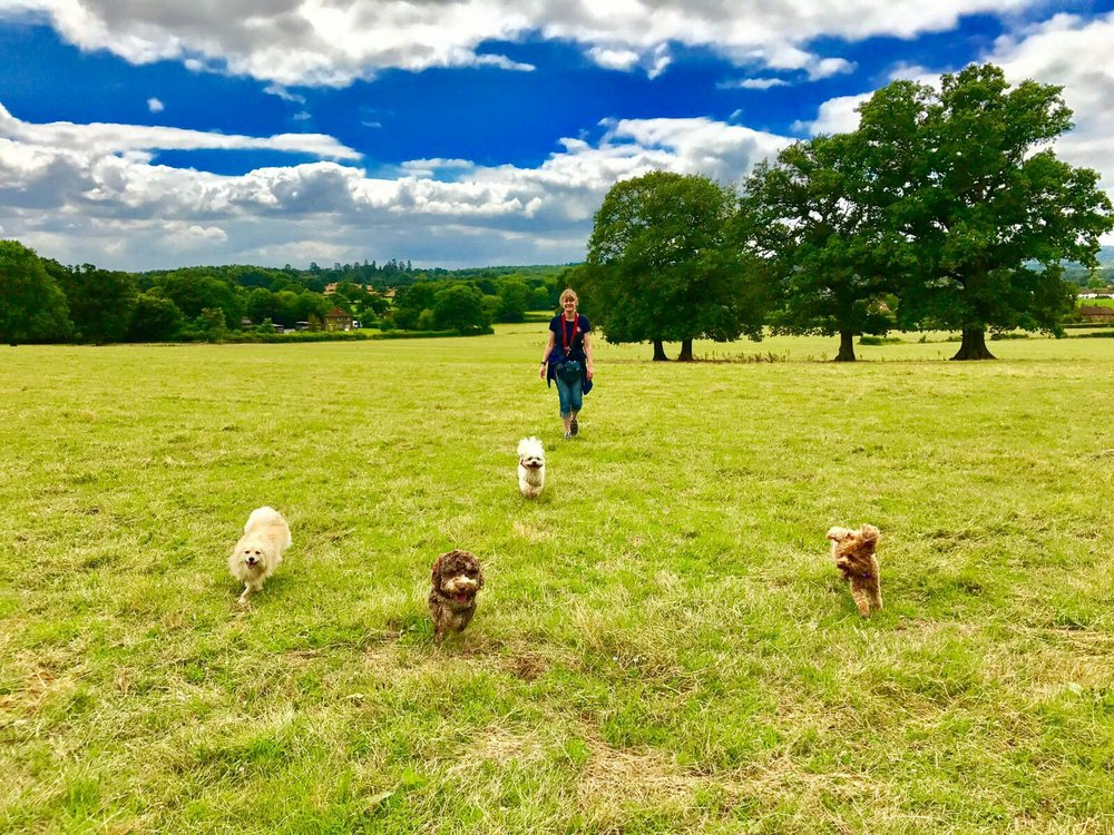 Best dog walks in Reigate