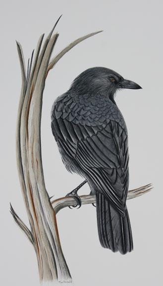 crow-in-dead-tree-IMG_5275.jpg
