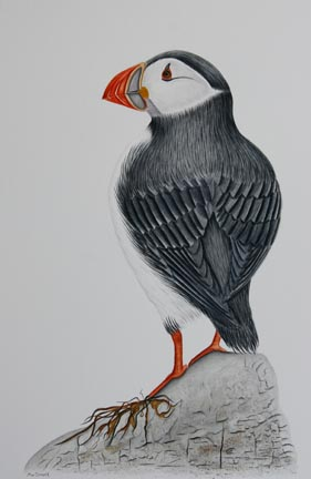 Atlantic-puffin-IMG_5476.jpg