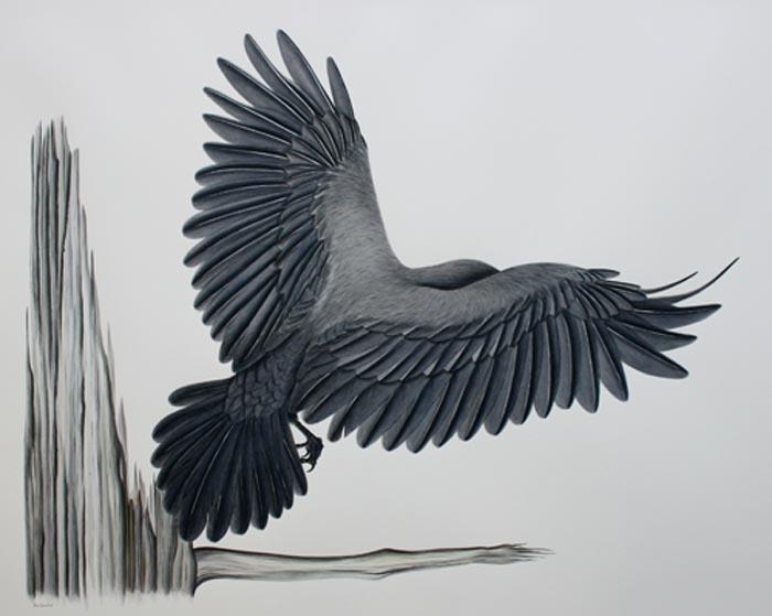 raven-IMG_5486.jpg