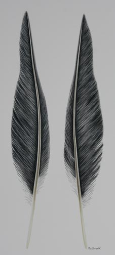 two-feathers-IMG_4830.jpg