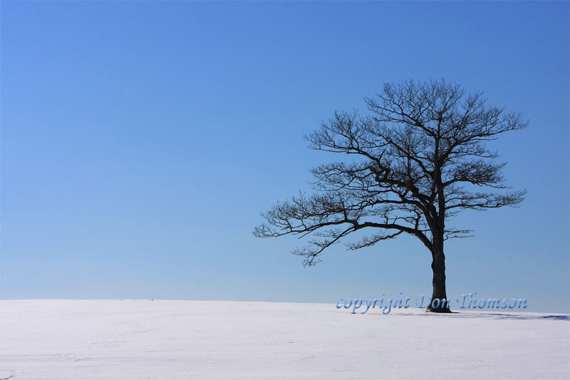 lone-winter-tree.jpg