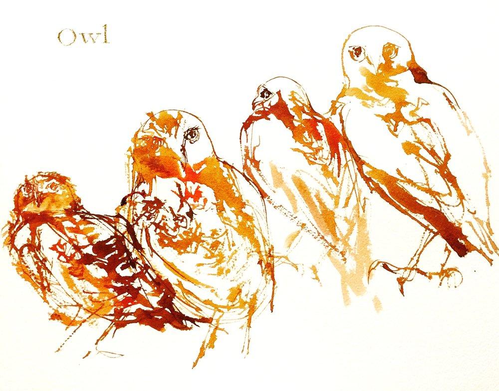 Owls, 2016