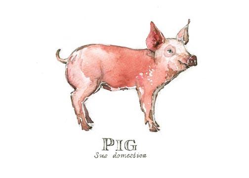 Pig card web.jpg