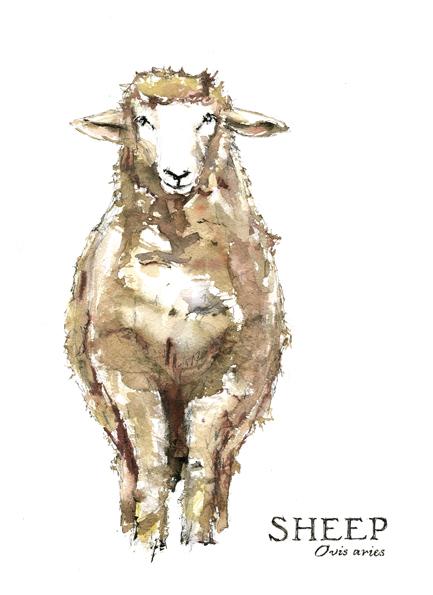 Sheep, 2013