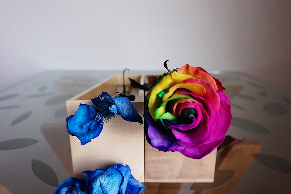 gift rose 02