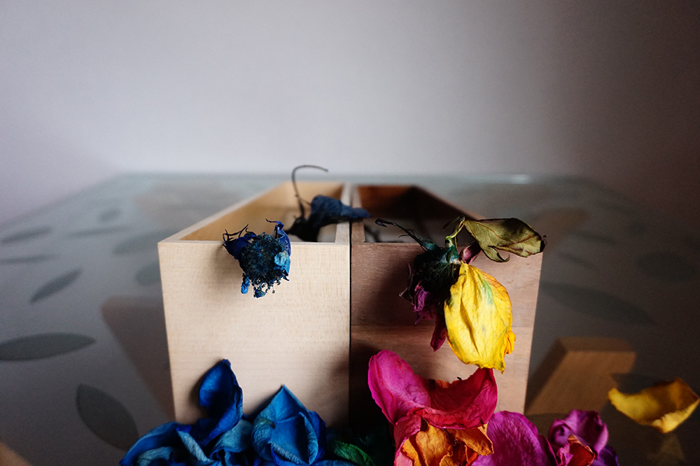 gift rose 03