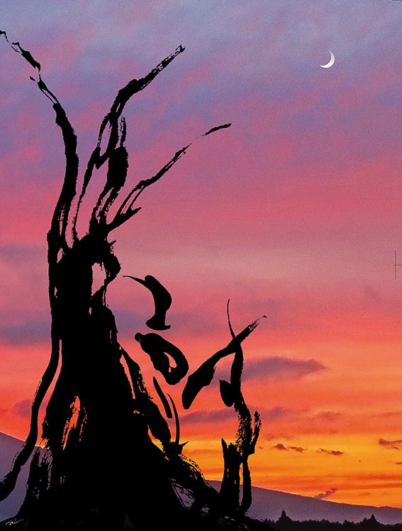 Tree | 樹