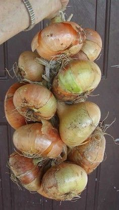 Local Irish Onions