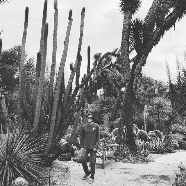 High cacti