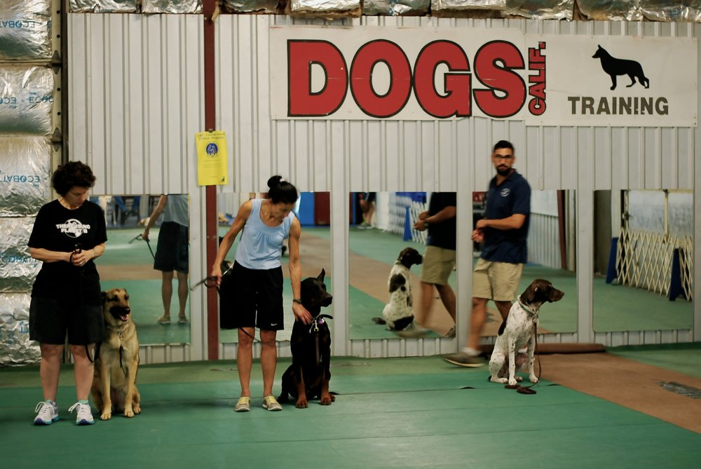 Group Obedience Training Give your dog the fundamentals they need to be the companion everyone will enjoy being around. Our group training is designed for all breeds of dogs and teaches the fundamentals to good decision making,attention exercises and basic commands.