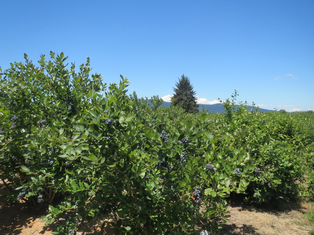Sonoma County, BBM 102.JPG