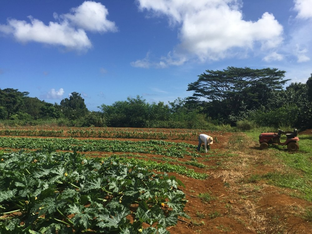 A visit to Glory Farm, one of the many organic farms on Kauai that we're blessed to work with.