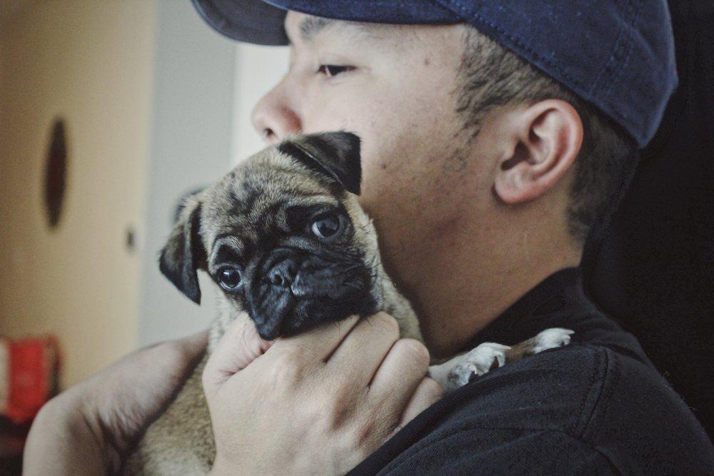 #14 Meet Hammie the Pug.JPG