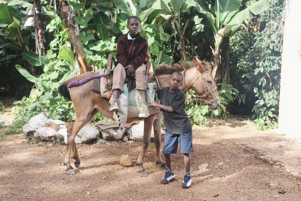 Donkey Leading [2].JPG