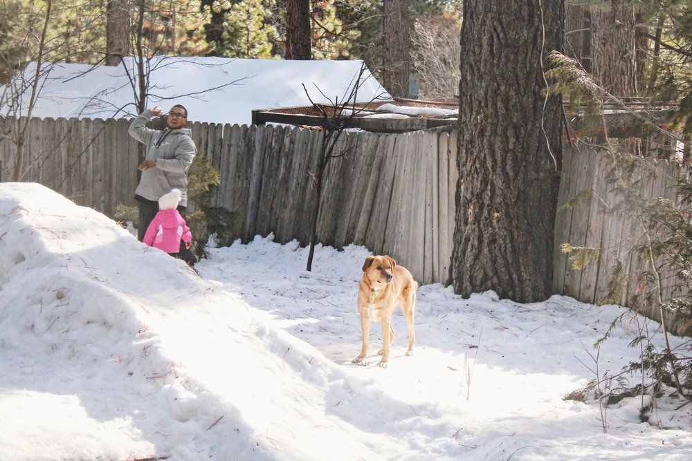 This Dog Loves Snow [4].JPG