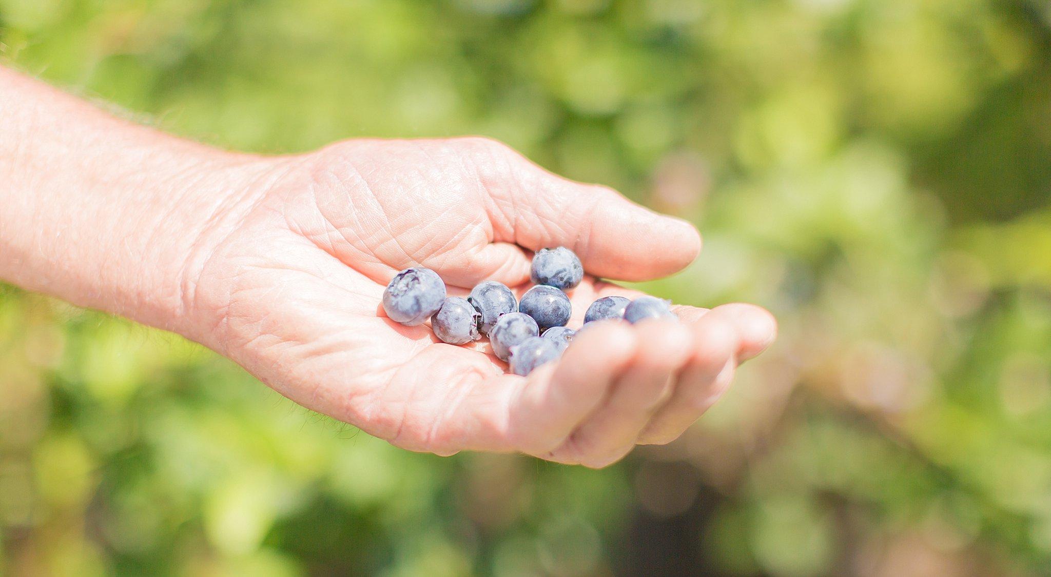 blu witt farms_0005.jpg