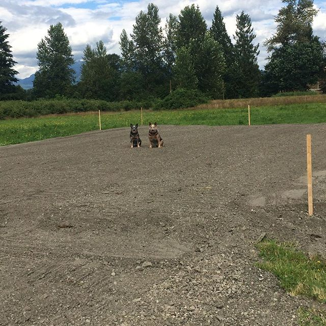 I have some exciting news! After years of dreaming and hard work, I am finally building my own herding facility! 🐑 I'm calling it Blue Collar Farm! 🐺  The girls can't wait for sheep of their very own :) Stay tuned for more updates. ---------------------------------- #blueheeler #heeler #herding #sheep #sheepherding #workingdog #farm #farmlife #bluecollar