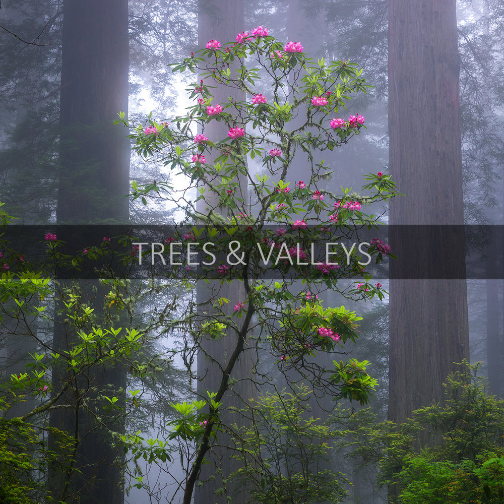 gallery-icon_trees&valleys.jpg