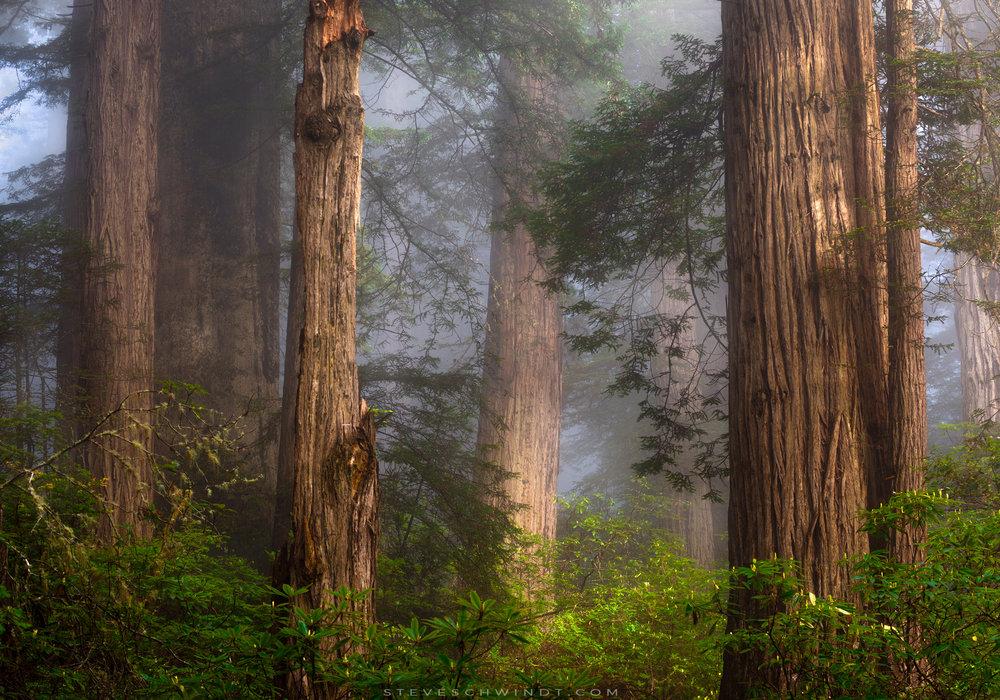 Trees & Valleys
