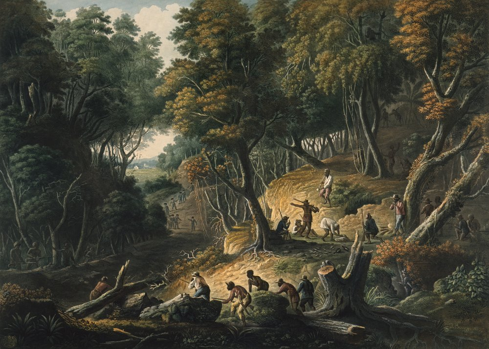 (c) The British Library Board. The Maroons in Ambush on the Dromilly Estate in the Parish of Trelawney, Jamaica (1801)