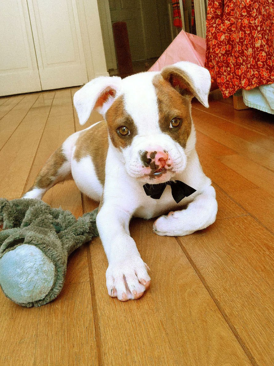 Puka as a Puppy.  OMG that face!!! @chilberg on Instagram with #Pukaismyhomie