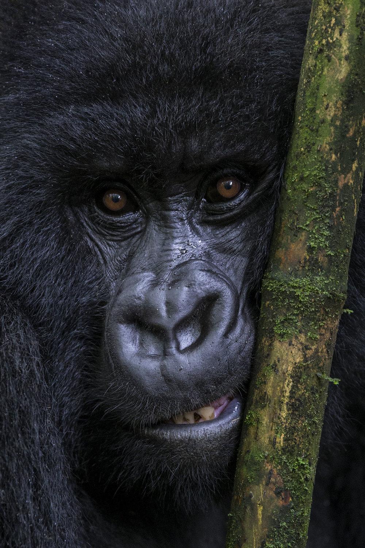 Gorilla_Trek_19.jpg