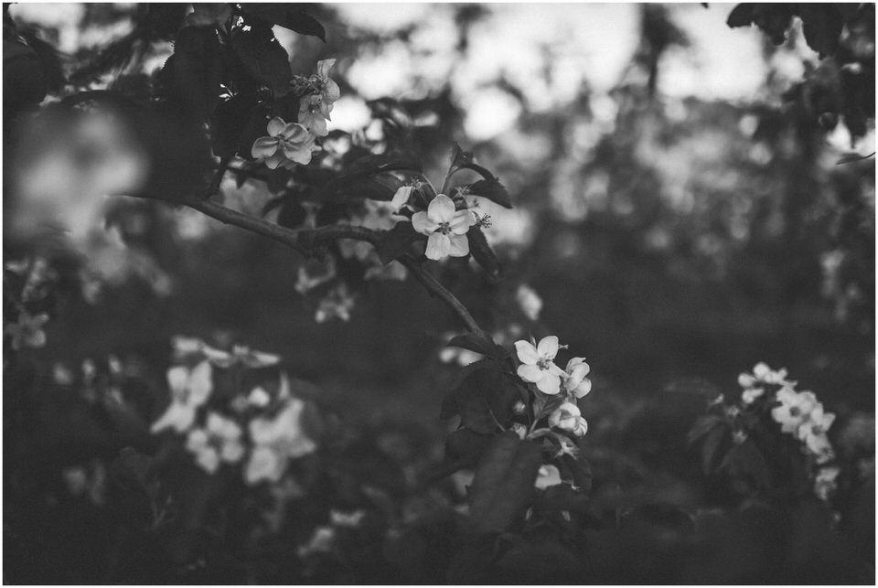 poroka-wedding-inspiration-spring-styled-session-sanjska-obleka-nika-grega-orchard-themed-destionation-photographer-slovenia-poročni-fotograf-slovenija-europe-boho-romantic-vintage 044.jpg