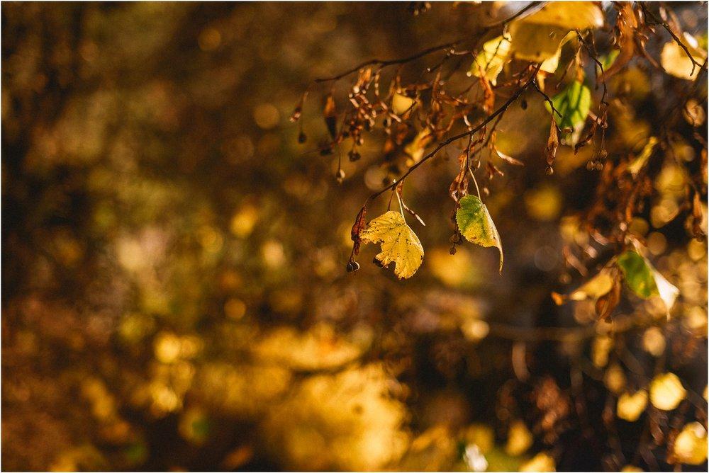 05 slovenija bled poroka ljubljana maribor brdo pri kranji nika grega porocni fotograf fotografiranje narava zaroka zaobljuba 005.jpg