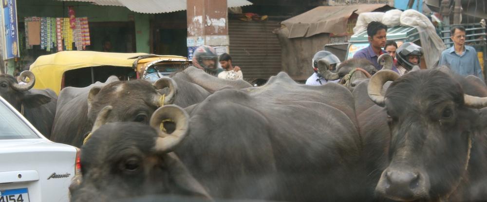 Innenstadt Agra