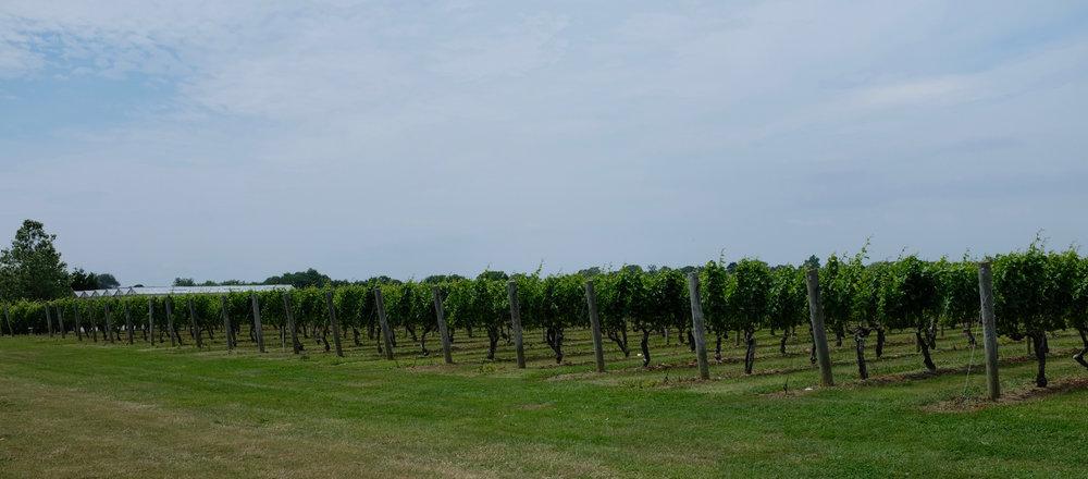 Regional und organic: Rosé aus den Hamptons, #roséallday - gefällt mir.
