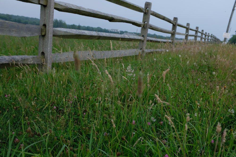 Natur pur - selbst eine eigene Rinderzucht hat der kleine Ort.