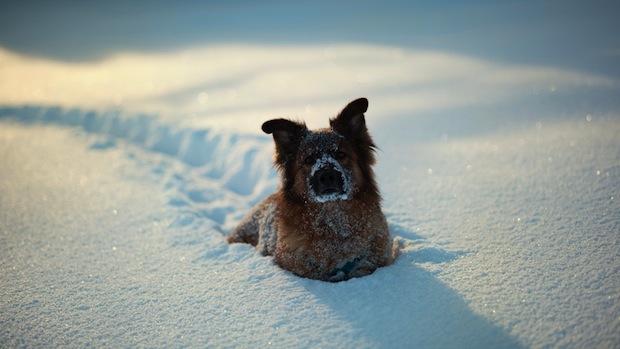 Little-Cute-dog-in-snow-HD-Wallpaper.jpg